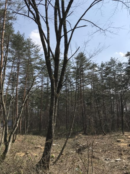 白馬村の別荘 森の隠れ家