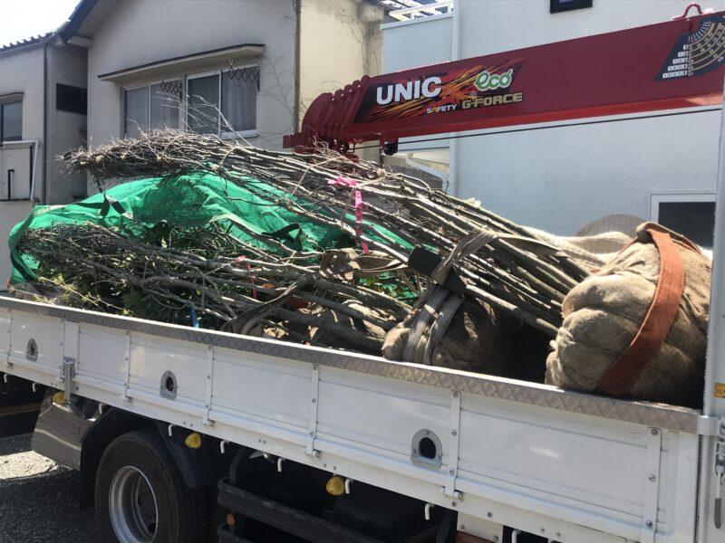 樹木の搬入