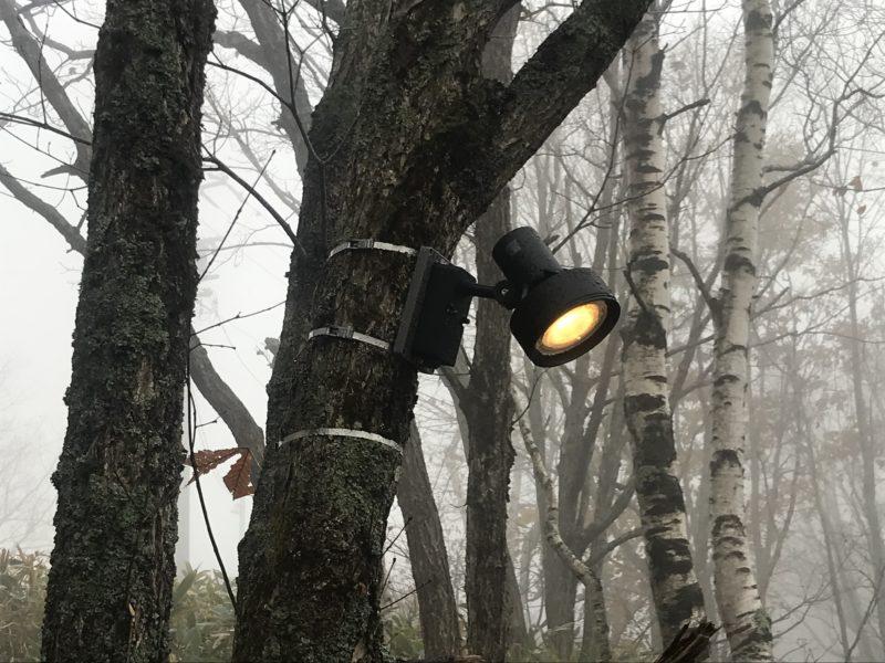 樹木に取り付けた外灯