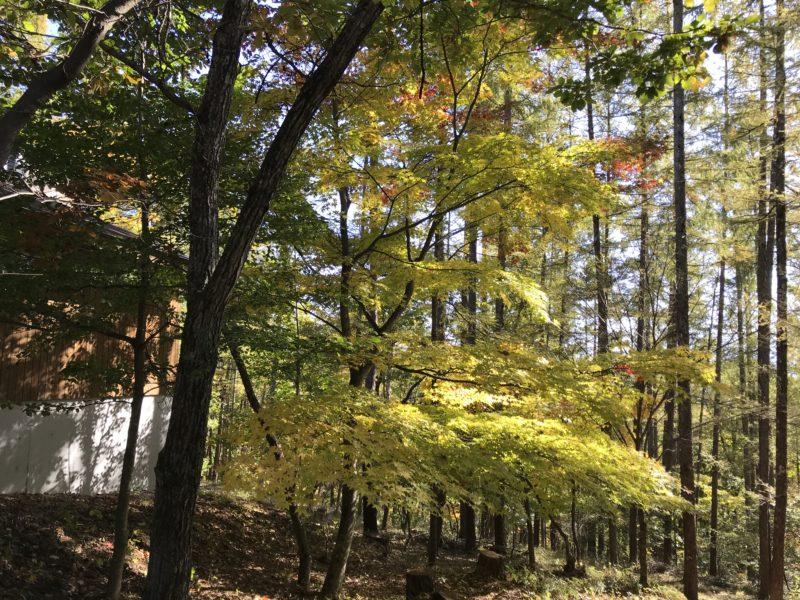 林建築設計室 蓼科のアトリエ 2020.10.25