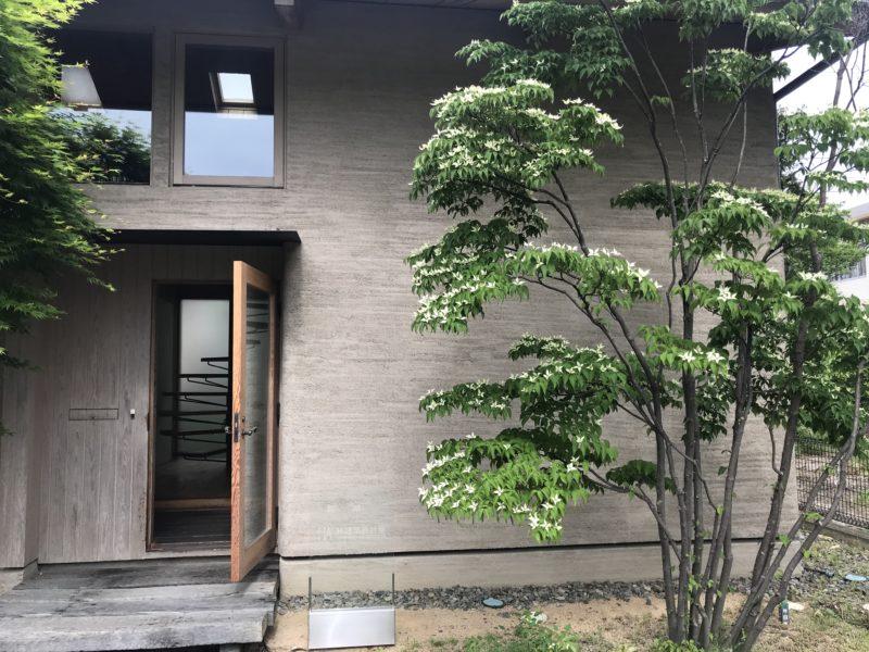 林建築設計室 玄関脇のヤマボウシ