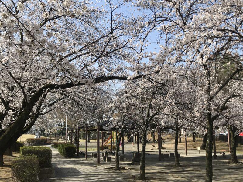 松本市南部公園 2021.4.1
